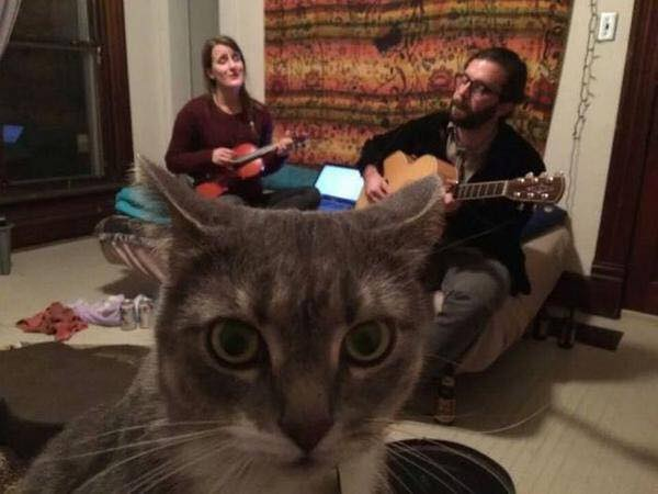 cats-trapped-in-folk-music-environment