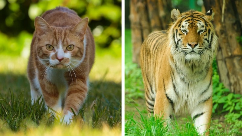 Little Cats Helping Big Cats with Cole and Marmalade
