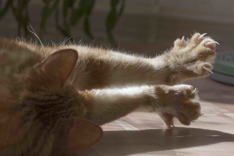 Three Tricks For Clipping Your Cats Nails The Catnip Times